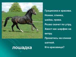 Сообщение о лошадях 3 класс