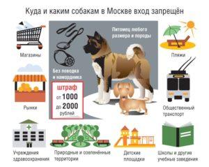 На каких собак нужно одевать намордник закон