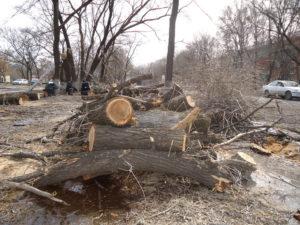 Вырубка деревьев на собственном участке закон разъяснение